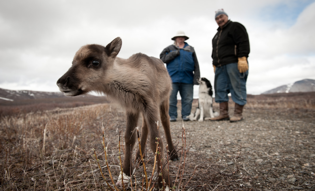 Business Portrait of Bruce and Ann Davis, Midnight Sun Reindeer Ranch in Nome, Alaska.