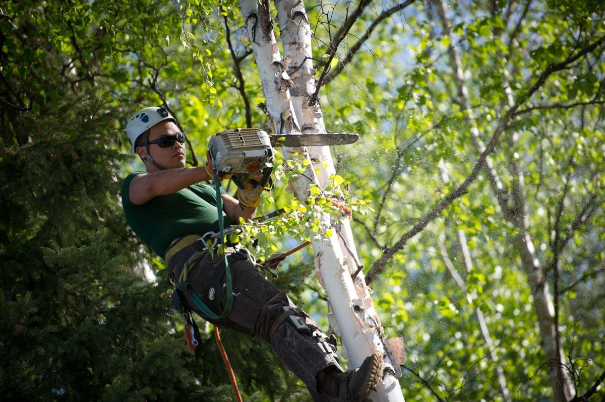 Business Portrait of Erik Johnson of Great Alaska Tree Company in Fairbanks, Alaska.