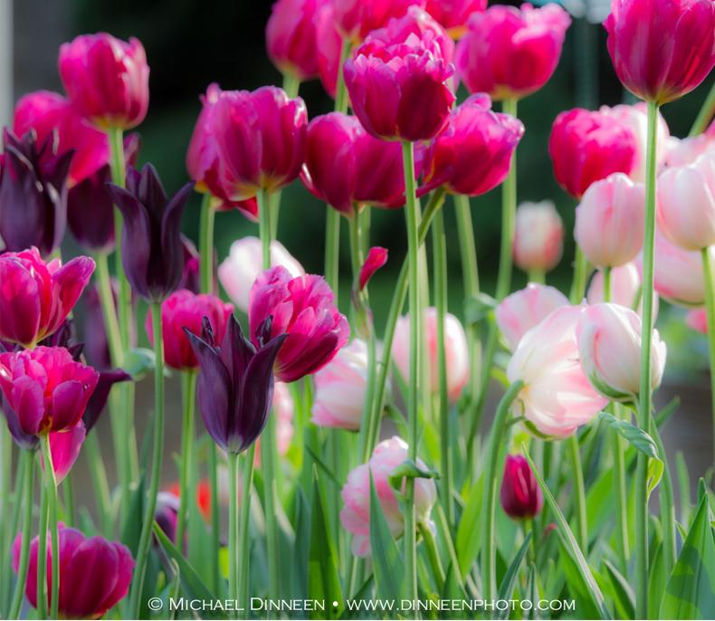 Garden Flora-3489