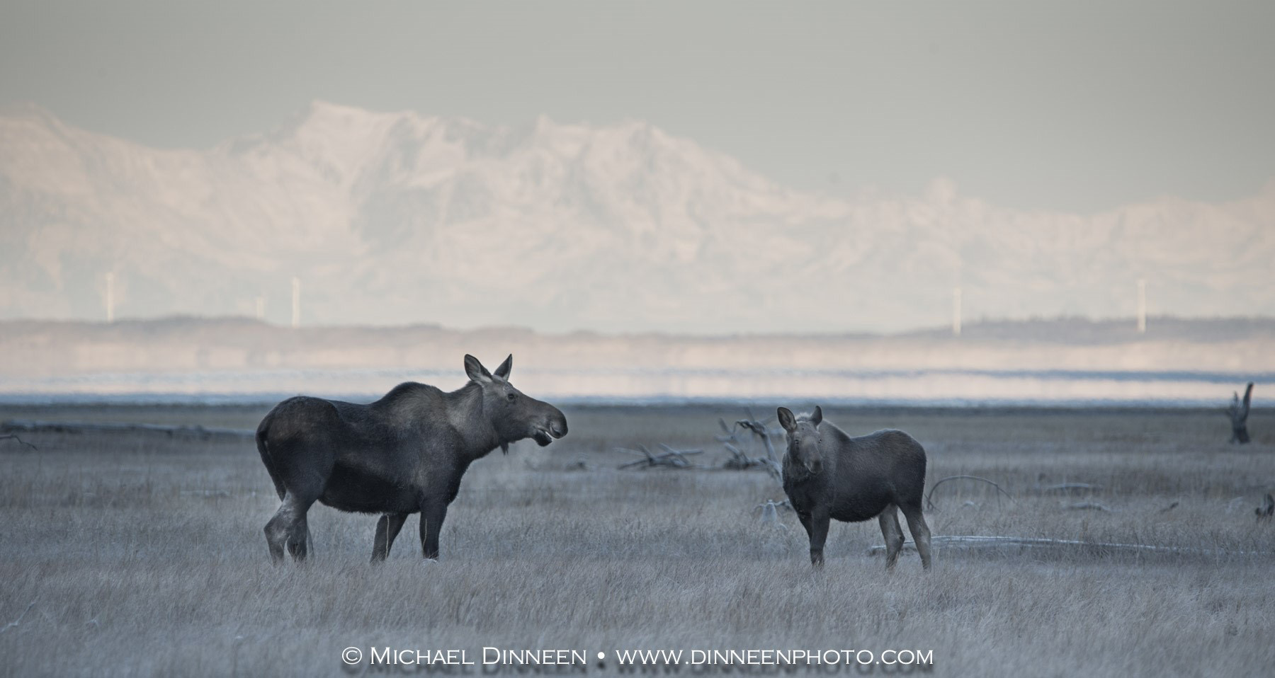Alaska Wildlife Photography by Michael Dinneen
