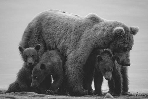 Alaska Wildlife Photos Michael Dinneen